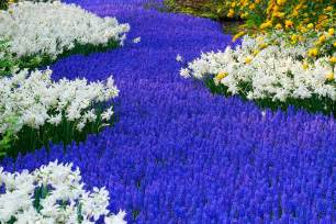 A Beautiful Flower Garden Beautiful Flower Garden Flower Forest Cool Wallpapers Wonderful Flower Garden Part 2