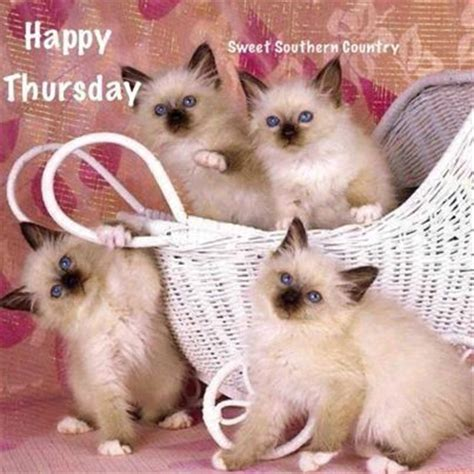 happy thursday cats pictures   images