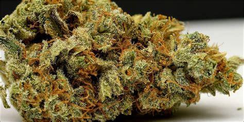 best strain 10 best strains to with