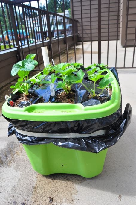 earthbox container gardening system 17 best images about earthbox on