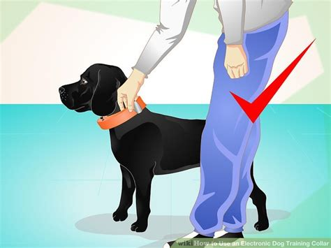 how to properly a with a shock collar how to use an electronic collar 10 steps