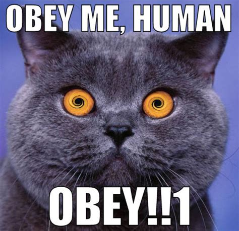 Obey Meme - obey me human cat meme cat planet cat planet