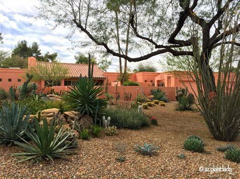 decorar jardin con plantas deserticas jard 237 n sin c 233 sped ideas para dise 241 ar tu patio el blog
