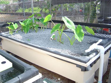 aquaponic backyard aquaponic gardening hydroponics program for the