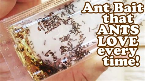 how to get rid of sugar ants in the house dealing with mistakes at work