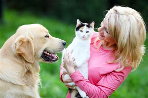 introducing cats and dogs cats and dogs socializing your pet