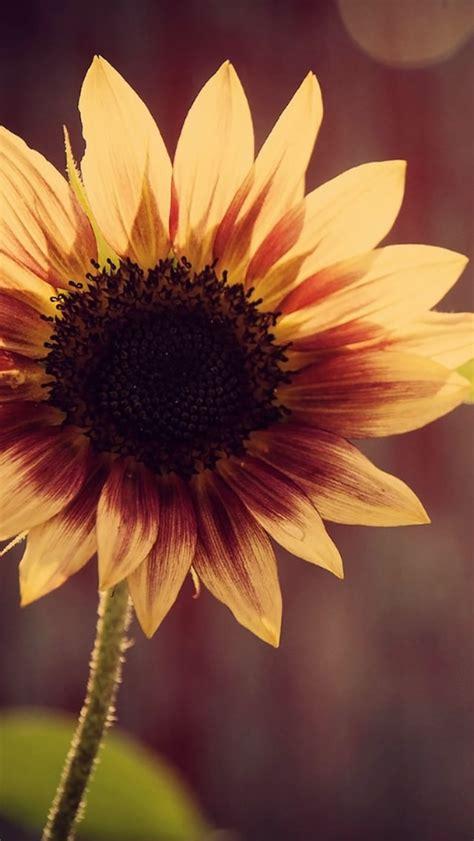 iphone wallpaper yellow flowers a yellow flower iphone 5 wallpaper 640x1136