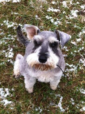 best shoo for dogs best behaviour school for dogs in sevenoaks kent trainers behaviourists clubs