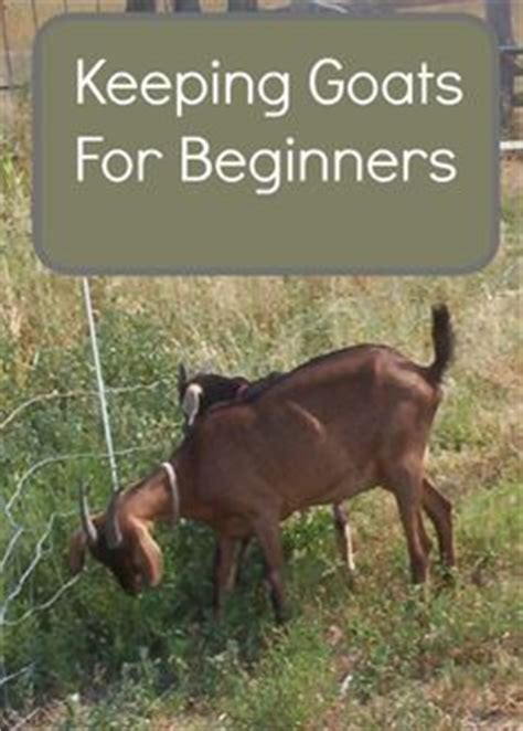 raising dairy goats a beginners starters guide to raising dairy goats books 1000 images about pets animals on boston