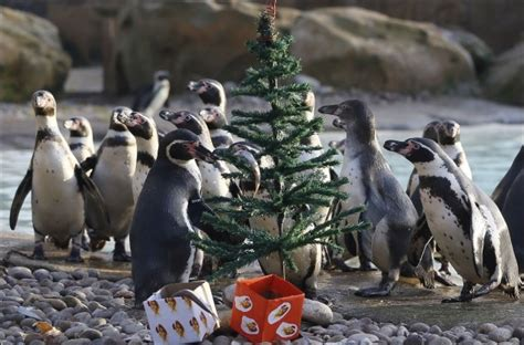 christmas in zoo fun news