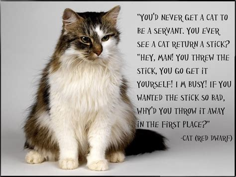 cat wallpaper with quotes cat quote red dwarf red dwarf pinterest to be words
