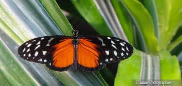 les jardins des papillons hunawihr