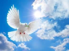 Dove of peace wallpaper forwallpaper com