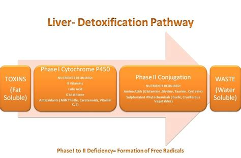 Liver Detox Pathways by Wine Green Tea And Chocolate Be Alert Mcneil