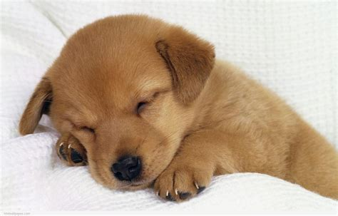 pictures of puppy dogs and puppies wallpaper wallpapersafari