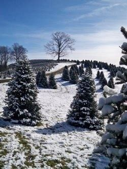 best nc christmas tree farm 71 best ashe county nc images on carolina west jefferson and mountains
