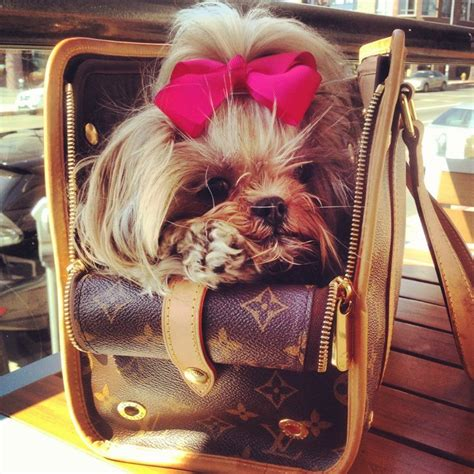 shih tzu carrier shih tzu louis vuitton puppy purse pink bow my sweet mei mei baxter