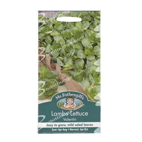 Benih Selada Lettuce Gem Mrfothergills Kemasan Asli benih lambs lettuce valentin 500 biji mr fothergills