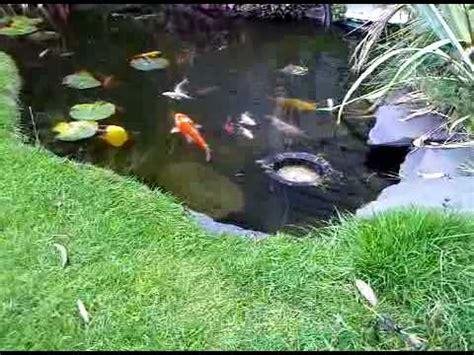 Ponds In Backyard Pond Skimmer In Action Koi Fish Youtube