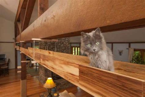 casa gatti la casa in legno diventa un parco giochi per gatti foto