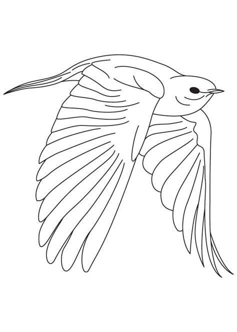 Blue Bird Coloring Pages Coloring Home Bluebird Coloring Page