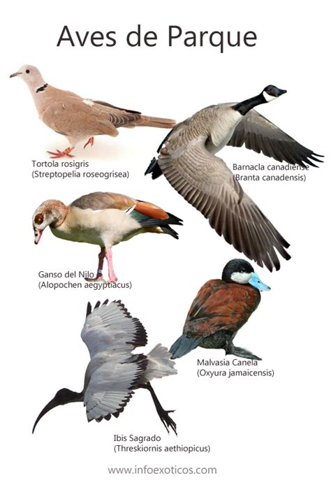 aves de espaa y especies de aves catalogadas como invasoras en espa 241 a