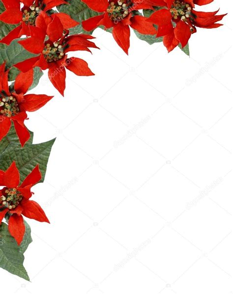 christmas poinsettia border stock photo 169 riffmax 2190979
