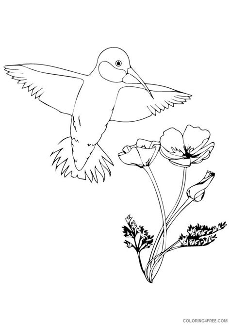 hummingbird coloring page realistic hummingbird coloring page ruby throated