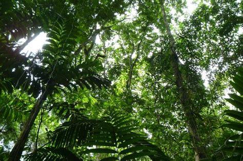jungle canopy canopy jungle canopy