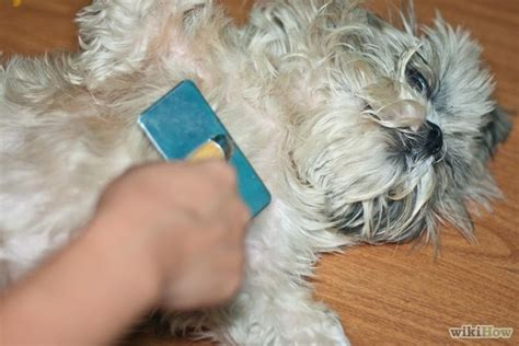 Mats In Dogs Hair by How To Brush Mats Out Of Hair 14 Steps Wikihow