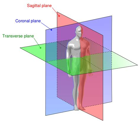 sagital section differences between sagittal frontal and transverse planes