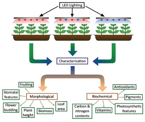 light emitting diode environmental impact impact of light emitting diodes leds and its potential on plant growth and development in