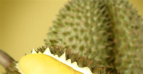 Pupuk Untuk Bunga Durian durian monthong planet tanaman