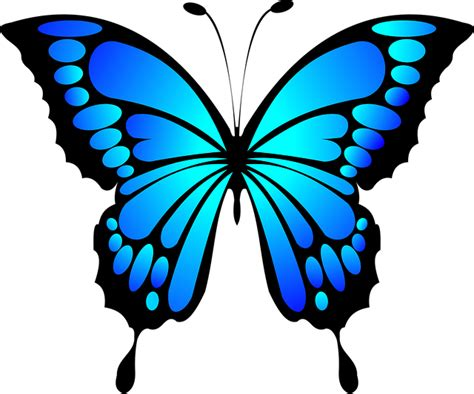 Butterfly Blue butterfly blue insect 183 free vector graphic on pixabay