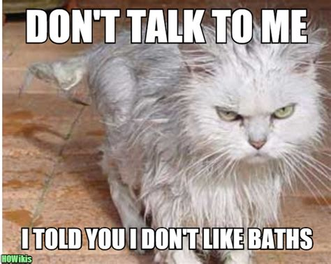Wet Cat Meme - wet cat meme memes