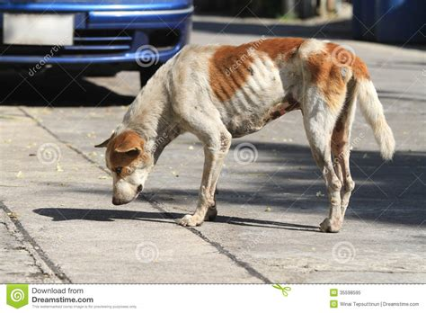 dogs on the homeless on the road stock image image of lonely 35598595