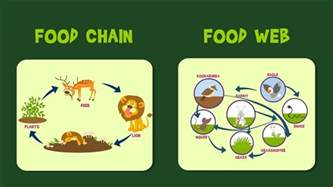 Ford Chaign Food Chain Food Web For