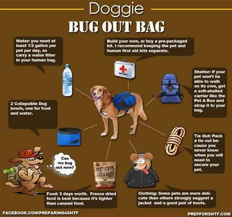 can bed bugs live in tvs 1000 images about bug out bag on pinterest bug out bag 72 hour kits and survival bags