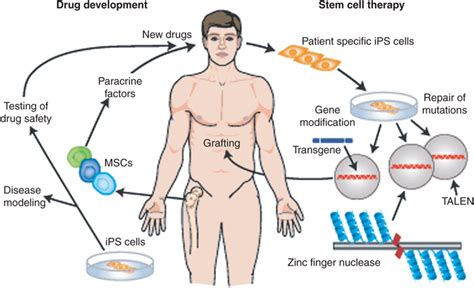 stem cell treatment now stem cell treatment now some alternative what is cell therapy health nutrition