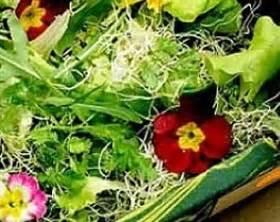 fiori di co primaverili le ricette primaverili con verdure e fiori