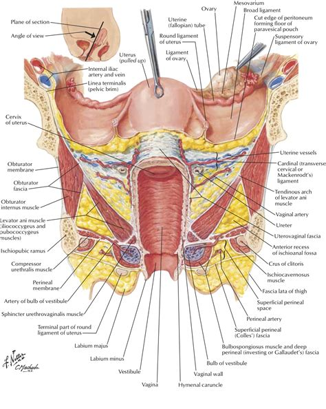 diagram of hysterectomy hysterectomy the experts speak out