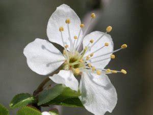 fiori di bach paura la paura e i fiori di bach quali sono i rimedi pi 249 indicati