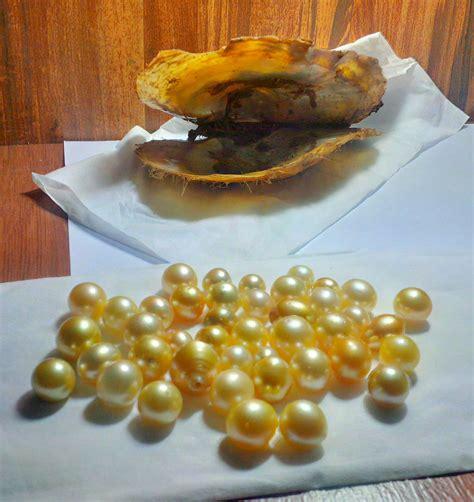 Permata Kerang original mutiara jenis kerang penghasil mutiara laut lombok