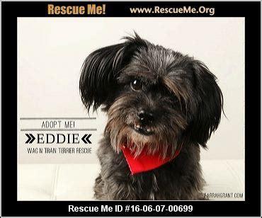 shih tzu rescue omaha nebraska shih tzu rescue adoptions rescueme org
