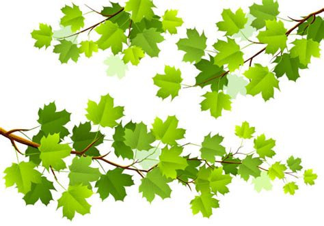 wallpaper ranting daun ranting ranting hijau musim semi hijau vektor tanaman