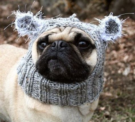pug winter hat pug with winter hat pugs pug hats and winter