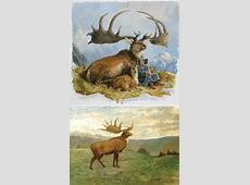 The Irish Elk (Megaloceros giganteus) - i (heart) odd-toed ... Irish Elk