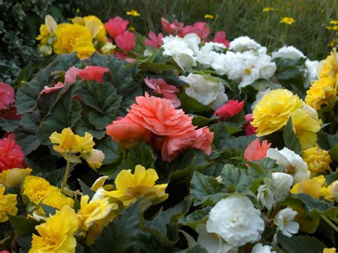 easiest annuals  plant  color  summer long