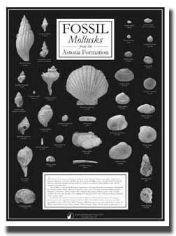 Agate Picture Plus Bonus educational fossil kits posters books from facets