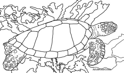 turtle coloring sheets teachcolor regarding sea turtles